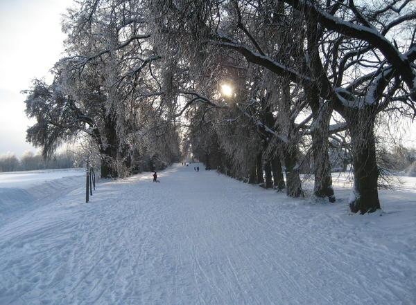Winter am Kapellenberg (Foto: Hans-Georg Schrader)