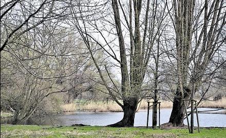 Die idyllischen Schellerter Schönungsteiche sind der zentralen Kläranlage nachgeschaltet. Foto:Wedig