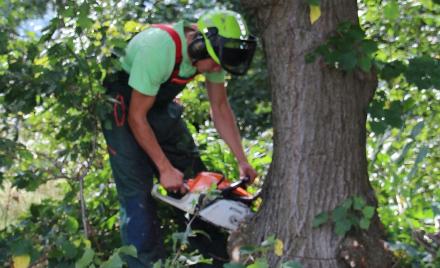 Der ZAH führt auch in diesem Jahr wieder eine Baum- und Strauchschnittaktion durch. Foto (c) Axel Witte/Gemeinde Schellerten